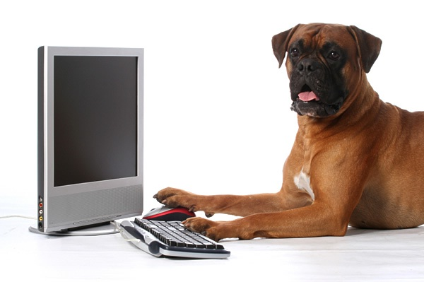 Dog-on-Computer