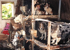 Pet Overpopulation Puppy Mills And Lessons From Proposition B