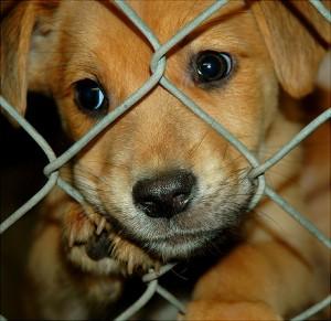 Criteria For Adopting A Rescue Dog