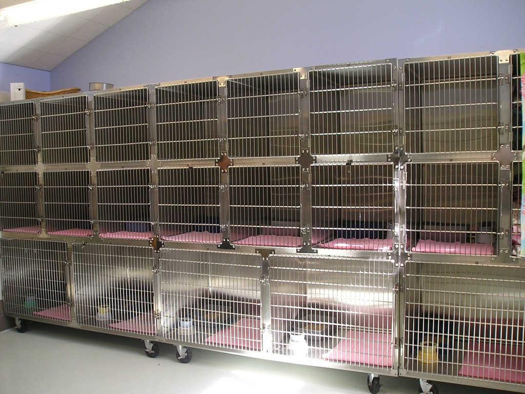 animal shelter research