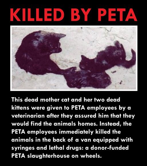 Dead Cats_0001