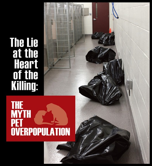 The Lie at the Heart of the Killing Blog header.pdf_Layout 1_0001
