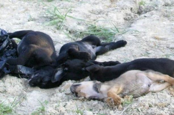 dead puppies_0001