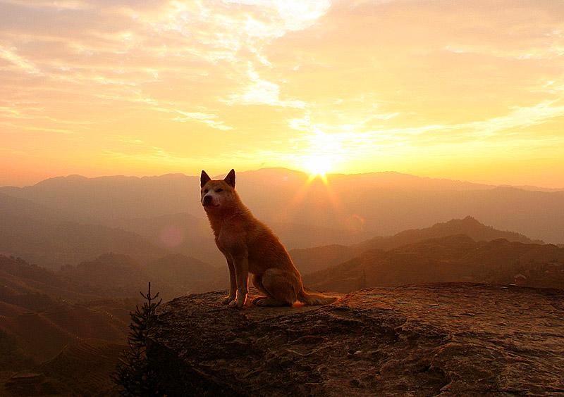 dog_in_the_sunshine