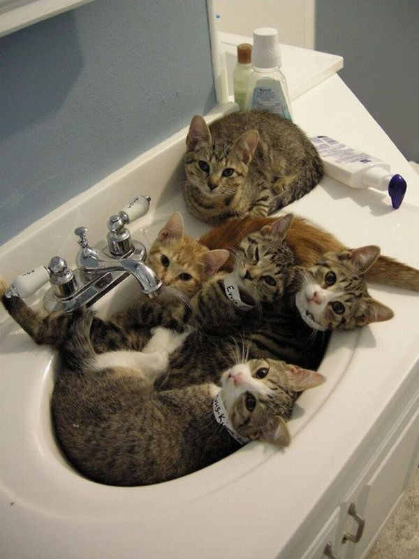 cats-in-bathroom-sink