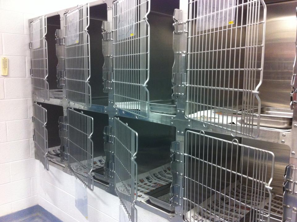 Where To Put Dog Crate For Rescue Dog
