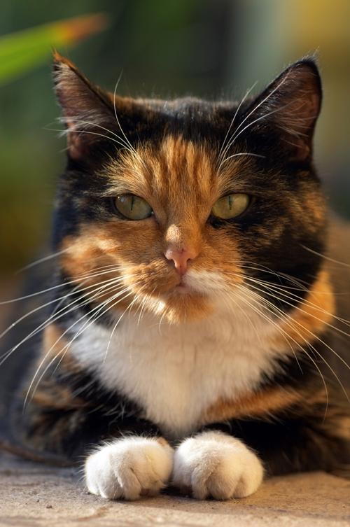 cat close up 2