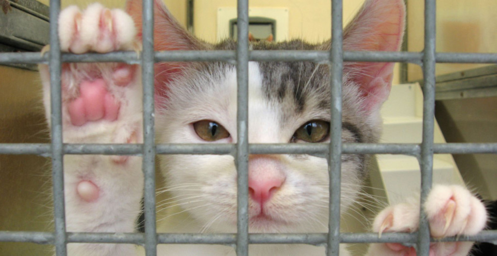 kitten paws against cage(1)