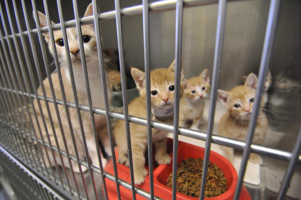 sheltercats