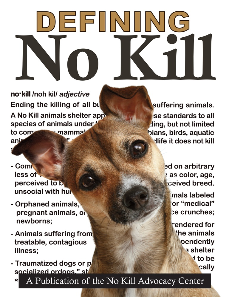 no kill shelters How to approach a no-kill shelter to take your cat, dog, kitten, puppy, or other pet.