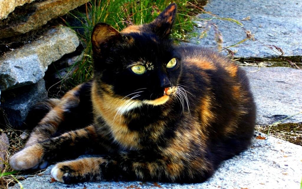 Beautiful-Cat-cats-16096389-1280-800