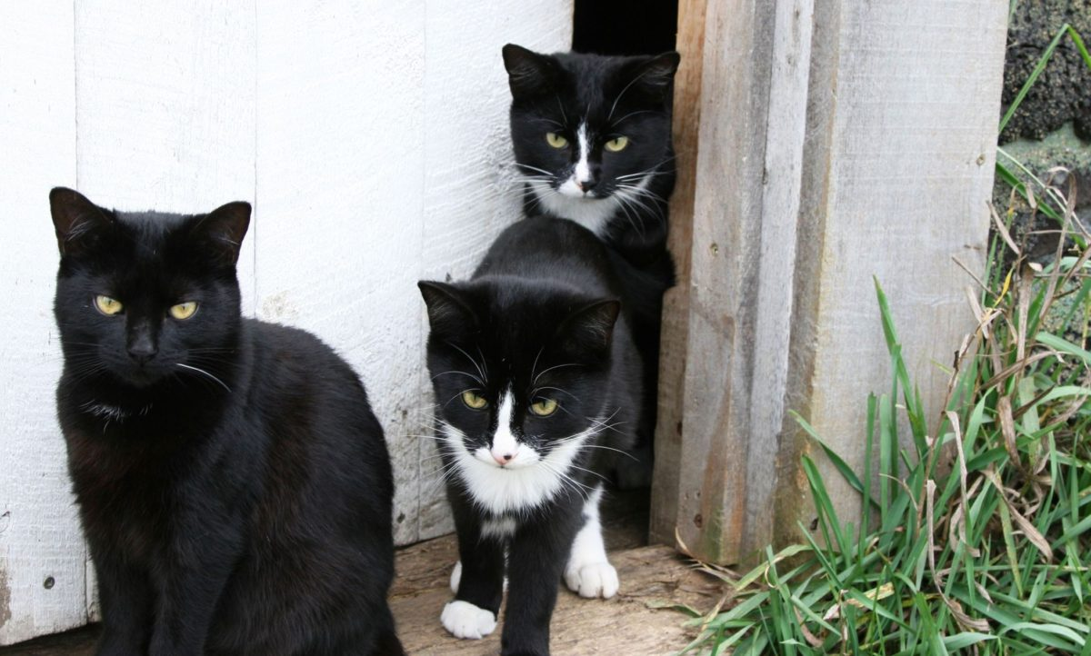 rsz_outdoor-cats-copy